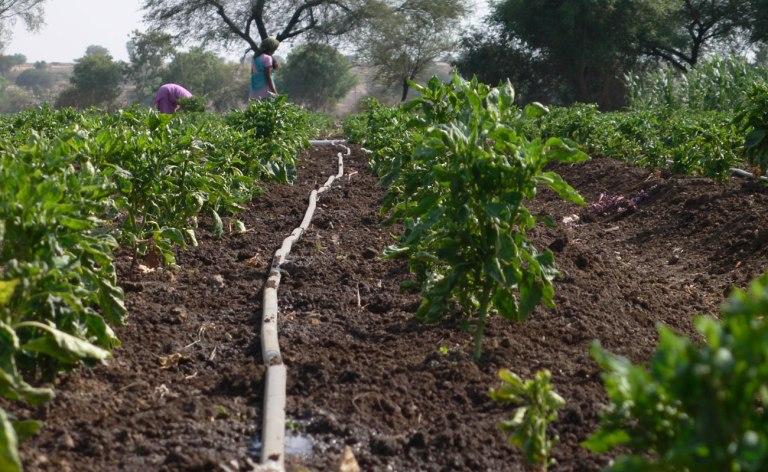 FN-CFD drip irrigation Humla 2015 (2)
